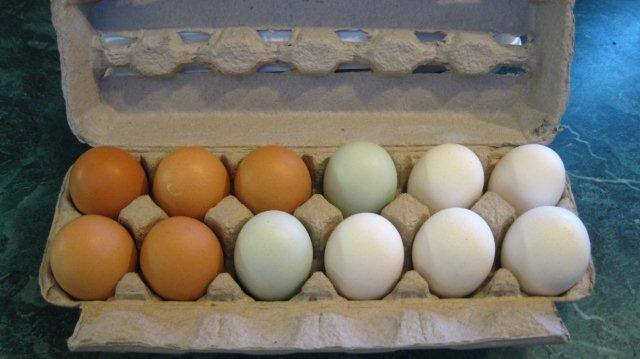 Rainbow Eggs Layed by our Heritage Chicken Breeds.jpg